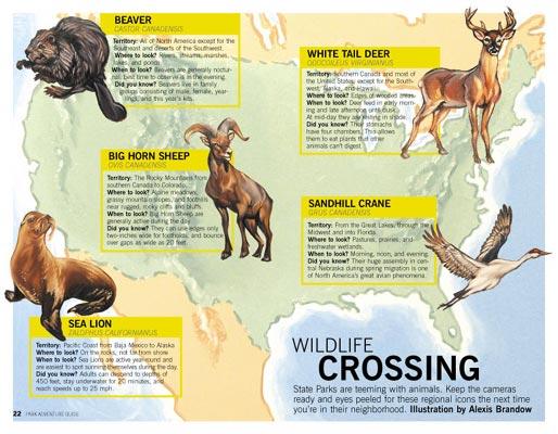 WILDLIFE CROSSING OIL